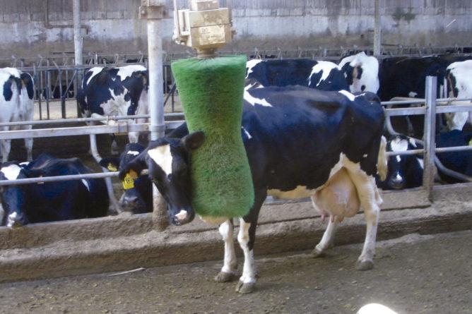 Escovas rotativas para bovinos
